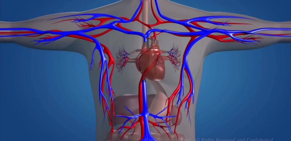 Title : Blood Circulation Of Heart